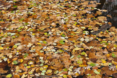 Abstract background of autumn leaves Royalty Free Stock Photos