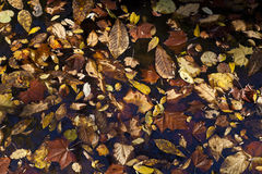 Abstract background of autumn leaves Stock Photography