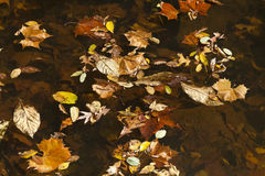 Abstract background of autumn leaves Stock Images