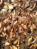 Abstract background, autumn leaves. stock photo