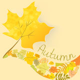 Abstract background with autumn maple leaf. Vector illustration royalty free illustration