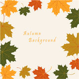 Abstract background with autumn maple leaves. Vector abstract background with autumn maple leaves royalty free illustration