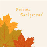 Abstract background with autumn maple leaves. Vector abstract background with autumn maple leaves Vector Illustration