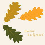 Abstract background with autumn oak leaves. Vector abstract background with autumn oak leaves royalty free illustration
