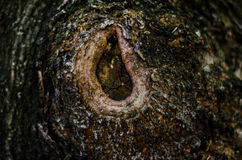 Abstract background. Bark of tree texture Stock Photo