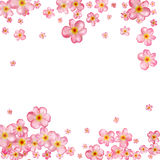 Abstract background with beautiful pink cherry blossom. Royalty Free Stock Photography