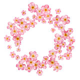 Abstract background with beautiful pink cherry blossom. Royalty Free Stock Image