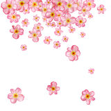 Abstract background with beautiful pink cherry blossom. Stock Photos