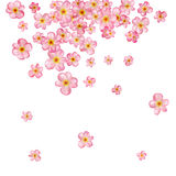 Abstract background with beautiful pink cherry blossom. Royalty Free Stock Images