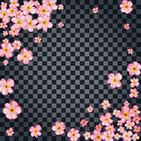 Abstract background with beautiful pink cherry blossom. Stock Images
