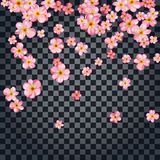 Abstract background with beautiful pink cherry blossom. Stock Image