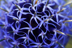 Abstract background of blue flowers Royalty Free Stock Image