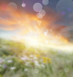 Abstract background. Abstract blurred summer sunrise background Royalty Free Stock Images
