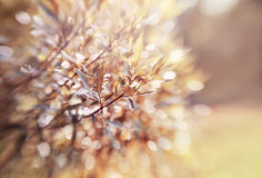 Abstract background with bokeh with branches of willow. Royalty Free Stock Photography