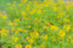 Abstract background bokeh from flower Stock Images