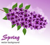 Abstract background with a branch of lilac. оn a purple background vector illustration