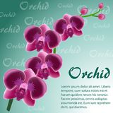 Abstract background with a branch of a pink orchid. On a green background Stock Photo