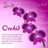 Abstract background with a branch of a pink orchid. On a pink background Royalty Free Stock Photos