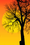 Abstract background branches of big tree silhouette and sun Royalty Free Stock Photography