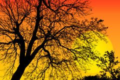 Abstract background branches of big tree silhouette and sunset Stock Photos