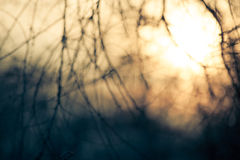 Abstract background branches defocused Stock Photos