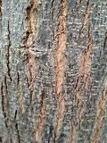 Old Wood background texture with lining in wood royalty free stock photos