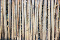 Abstract background. Bunch of sticks. Stock Image