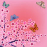 Abstract background with butterfly and flowers. Abstract pink grunge background with flowers and butterflies Royalty Free Stock Images