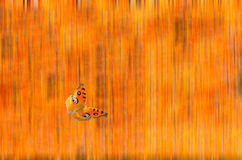 Abstract background butterfly Royalty Free Stock Photos