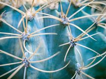 Abstract background of cactus close up. Echinocactus grusonii spineless form. Spine detail of big cactus. Cactus spines.  Royalty Free Stock Photography