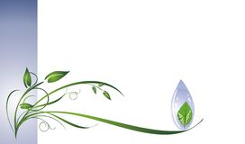 Abstract background for card. Foliage and drop. Vector illustration Stock Photo