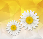 Abstract background with chamomile flowers. Over triangle pattern composition Stock Image