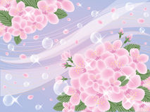 Abstract background with cherry blossom Stock Image