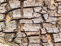 Abstract background close up crack trunk texture Stock Images