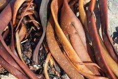 Close up image of seaweed stock photos