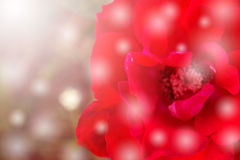 Abstract background and color filter of red rose. Royalty Free Stock Photography