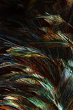 Abstract background colorful and dark shadow of Feather Royalty Free Stock Photography