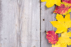 Abstract background of colourful autumn leaves royalty free stock photos