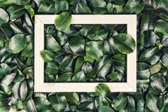 Abstract background, Creative layout, green leaves, white frame. Flat lay. Nature concept. Abstract background. Creative layout made of green leaves with white Royalty Free Stock Photos