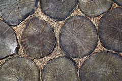 Abstract background of cross section of timber with pine needles. Stock Photo
