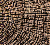Tree trunk abstract background Stock Photos