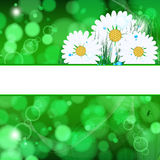 Abstract background with daisies. Abstract background with daisies and grass and drops vector illustration