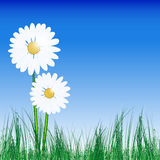 Abstract background with daisies and grass. Illustration for your design Royalty Free Stock Image