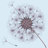 Abstract background of a dandelion for design. The wind blows the seeds of a dandelion. Template for posters, wallpapers, posters. Vector illustrations royalty free illustration