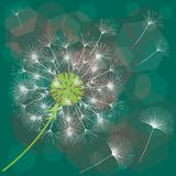 Abstract background of a dandelion for design. The wind blows the seeds of a dandelion. Template for posters, wallpapers, posters. Vector illustrations stock illustration