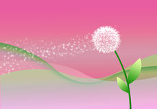 Abstract  background with dandelion. Royalty Free Stock Photo