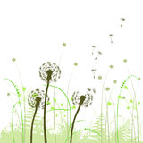 Abstract background with dandelions Stock Photo