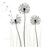 Abstract background with dandelions. Vector illustration stock illustration