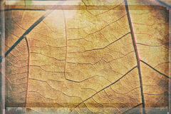 Abstract background - detail of autumn leaf Royalty Free Stock Image