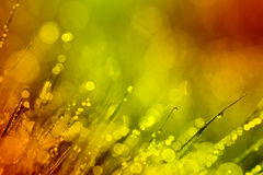 Abstract background  dew warm toning Royalty Free Stock Images
